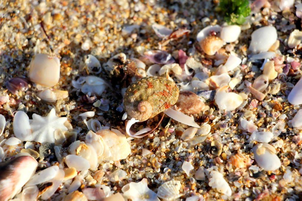 On the Fingal Bay beach - The good ...