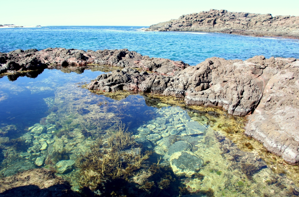 Rockpool at Bushrangers Bay