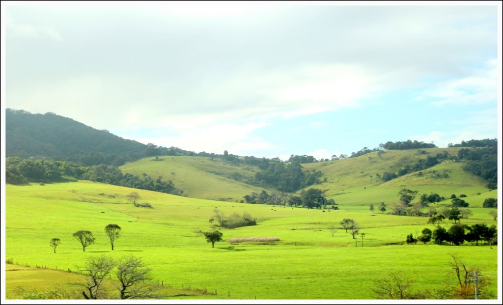Don't be surprised to find verdant hills on your way to Kiama - Diary farms in Kiama once exported butter all the way to London