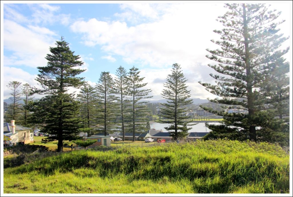 The Cedar trees at Kiama were once the foundation for its economy, when the town was first settled over 200 years back