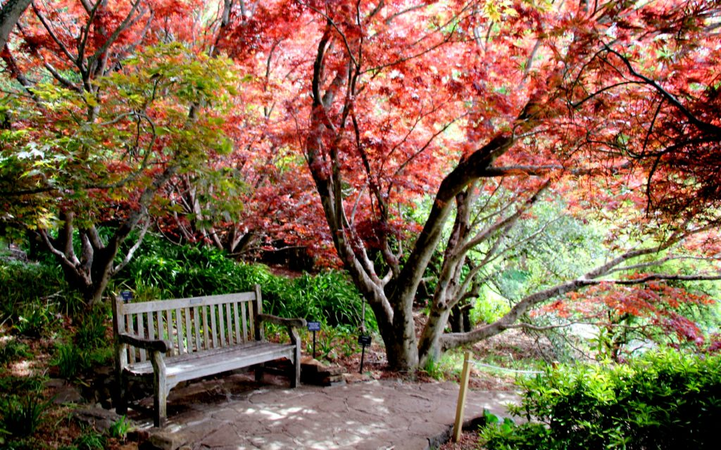 A surprising mix of red and green colours even in early Spring seem to be painting a picture of timelessness at the Mt Tomah Gardens